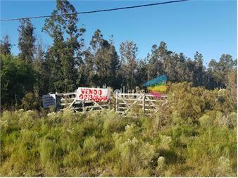 http://www.gallito.com.uy/6-chacras-en-la-floresta-inmuebles-12491502