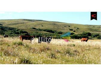 http://www.gallito.com.uy/campo-ganadero-en-cerro-largo-en-venta-ref-5117-inmuebles-12552811