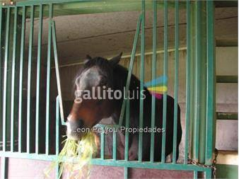 http://www.gallito.com.uy/haras-de-lujo-8-5-has-16-caballerizas-los-cerrillos-inmuebles-12881726