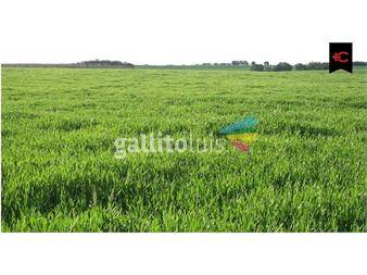 http://www.gallito.com.uy/campo-agricola-ganadero-en-durazno-en-venta-ref-5145-inmuebles-12552730
