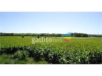 https://www.gallito.com.uy/campo-agricola-la-conocordia-en-colonia-ref-2156-inmuebles-12443203