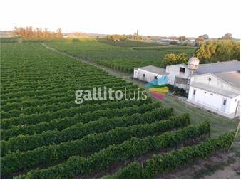 https://www.gallito.com.uy/oportunidad-venta-de-bodega-en-funcionamiento-inmuebles-12645438