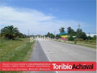 https://www.gallito.com.uy/amplio-terreno-sobre-principal-de-nueva-helvecia-inmuebles-12646362