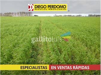 https://www.gallito.com.uy/campo-en-venta-en-san-jose-59-has-inmuebles-13428292