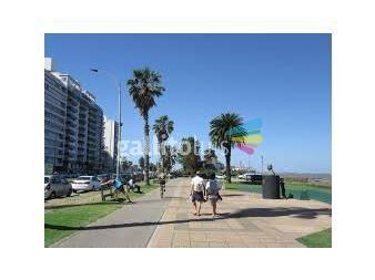 https://www.gallito.com.uy/operador-inmobiliario–tasador–rematador-m5705-cel-099379660-servicios-13485172