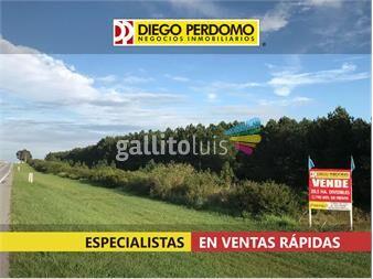 https://www.gallito.com.uy/campo-en-venta-205has-colonia-inmuebles-13755685
