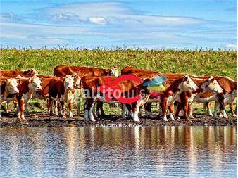 https://www.gallito.com.uy/campo-agricola-ganadero-en-durazno-ref-5809-inmuebles-13298410
