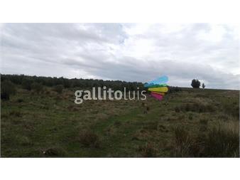https://www.gallito.com.uy/dueño-vende-chacra-con-olivos-y-de-recreo-inmuebles-14790235