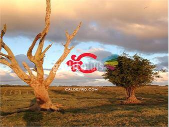 https://www.gallito.com.uy/chacra-oceania-del-polonio-ref-2581-inmuebles-14165800