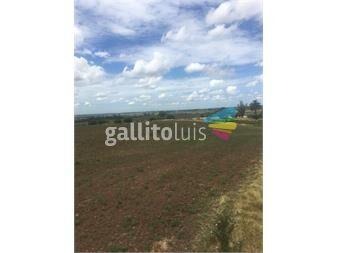 https://www.gallito.com.uy/57-ha-a-8-km-de-migues-sobre-ruta-108-50-financiado-inmuebles-14600005