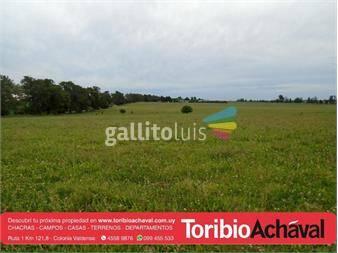 https://www.gallito.com.uy/excelente-chacra-agricola-perfil-descanso-recreativo-inmuebles-14667577