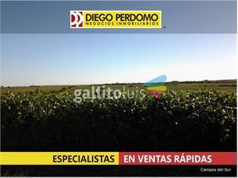 https://www.gallito.com.uy/campo-de-400-has-en-venta-san-jose-inmuebles-14859251