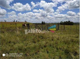 https://www.gallito.com.uy/vendo-campo-12h-inmuebles-15036007