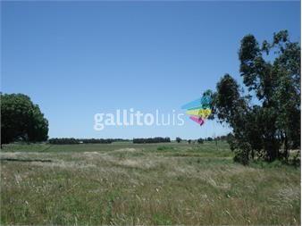 https://www.gallito.com.uy/campo-para-agricultura-ganaderia-haras-o-descanso-inmuebles-15232966