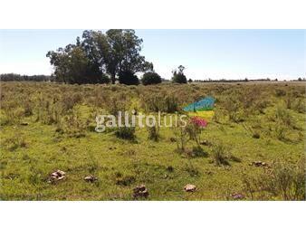 https://www.gallito.com.uy/campo-de-24-has-inmuebles-15266083