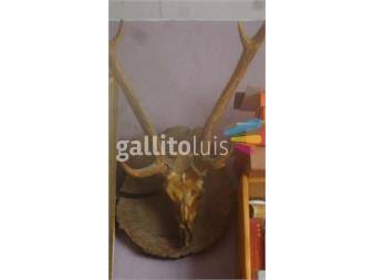https://www.gallito.com.uy/cabeza-de-ciervo-productos-17121808