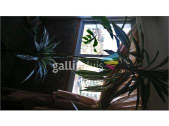 https://www.gallito.com.uy/seis-enormes-plantas-excelente-cuidado-con-macetas-productos-17929421