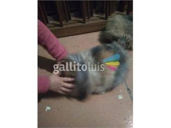 https://www.gallito.com.uy/conejos-leon-lop-productos-18824087