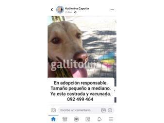 https://www.gallito.com.uy/en-adopcion-responsable-hermosa-cachorra-de-6-meses-aprox-productos-19103729