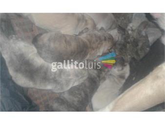 https://www.gallito.com.uy/cachorros-cimarrones-puros-productos-19811499