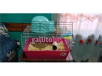 https://www.gallito.com.uy/jaula-completa-cobayo-productos-20266233