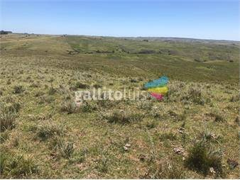 https://www.gallito.com.uy/treinta-y-tres-tupambae-64-has-campo-forestal-ganadero-inmuebles-13293415