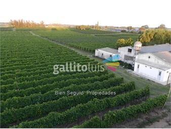 https://www.gallito.com.uy/chacra-con-viñedo-y-bodegas-en-venta-prox-toledo-inmuebles-12937289