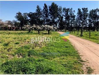 https://www.gallito.com.uy/alquiler-de-terreno-de-5000-m2-en-melilla-inmuebles-14373005