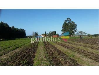 https://www.gallito.com.uy/venta-cno-colonia-wilson-y-ruta-1-inmuebles-19480314