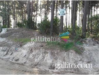 https://www.gallito.com.uy/terrenos-en-muy-bonito-lugar-completamente-financiados-inmuebles-10066245