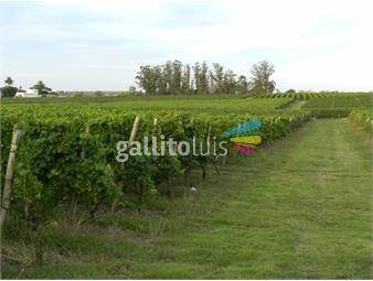 https://www.gallito.com.uy/bajo-de-precio-chacra-con-viñedos-inmuebles-12645387