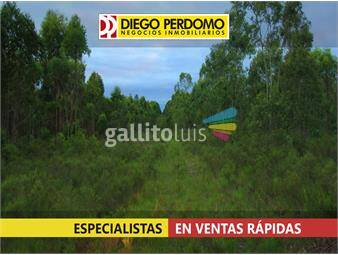 https://www.gallito.com.uy/campo-forestal-de-117-has-en-venta-san-jose-inmuebles-12952387