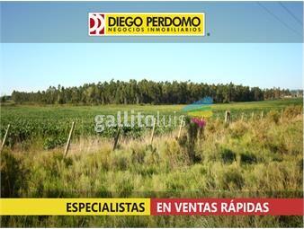 https://www.gallito.com.uy/chacra-en-venta-12-has-localidad-de-libertad-inmuebles-13124695