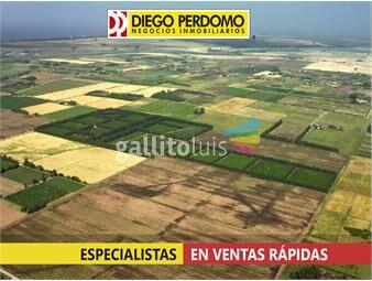 https://www.gallito.com.uy/chacra-en-venta-185-has-localidad-de-libertad-inmuebles-13135967