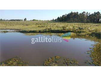 https://www.gallito.com.uy/excelente-chacra-produciendo-inmuebles-12961077