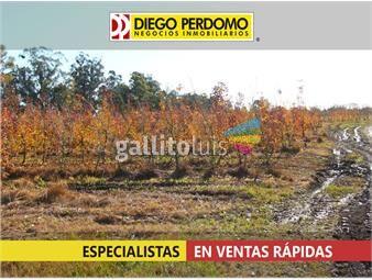 https://www.gallito.com.uy/quinta-de-alta-produccion-inmuebles-13162546