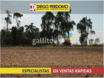 https://www.gallito.com.uy/425-ha-proximas-a-ruta-n-1-inmuebles-13167492