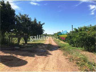 https://www.gallito.com.uy/proximo-camino-la-redencion-chacra-en-melilla-inmuebles-13428296