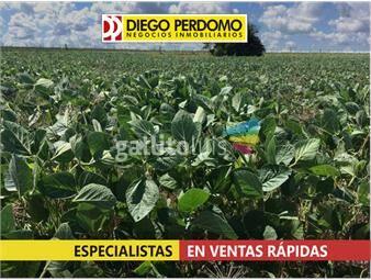 https://www.gallito.com.uy/campo-en-venta-en-san-jose-57-has-inmuebles-14486521