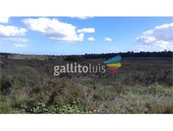 https://www.gallito.com.uy/excelente-campo-235-hect-prox-a-ruta-9-e-interbalnearia-inmuebles-13685887