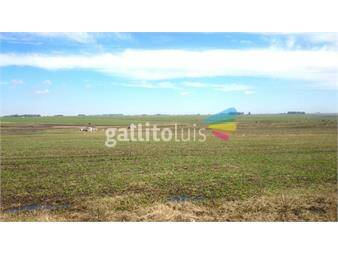 https://www.gallito.com.uy/excelente-campo-ganadero-140-indice-de-coneat-ruta3-flores-inmuebles-14247386