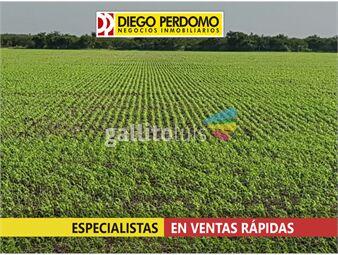 https://www.gallito.com.uy/campo-de-115-has-en-venta-san-jose-inmuebles-14476796