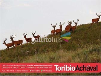 https://www.gallito.com.uy/excelente-coto-de-caza-mayor-proximo-isla-patrulla-inmuebles-14574656