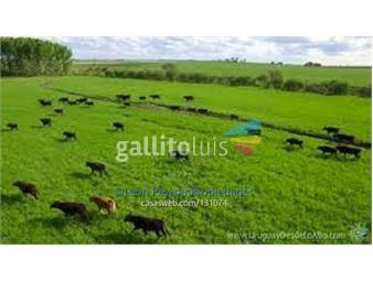 https://www.gallito.com.uy/durazno-establecimiento-agricola-ganadero-inmuebles-16331747