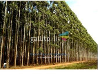 https://www.gallito.com.uy/rivera-campo-forestado-cexcel-renta-ganaderia-prod-prop-inmuebles-16331870