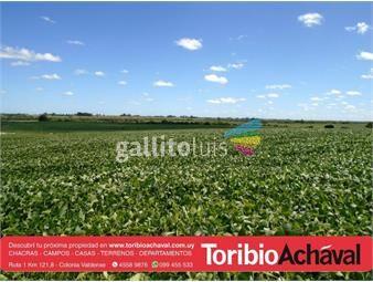 https://www.gallito.com.uy/129-has-agricolas-a-8-km-de-nueva-helvecia-p-ruta-asfaltada-inmuebles-15071740