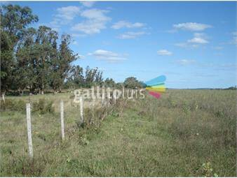 https://www.gallito.com.uy/campo-ideal-para-agricultura-45-has-en-4-padrones-inmuebles-12833807