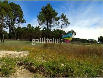 https://www.gallito.com.uy/hermoso-terreno-de-5000-m2-al-norte-de-av-giannattasio-inmuebles-15529016