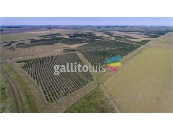 https://www.gallito.com.uy/venta-campo-forestal-ganadero-con-renta-inmuebles-16177951