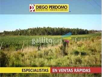 https://www.gallito.com.uy/chacra-en-venta-12-has-localidad-de-libertad-inmuebles-15916769